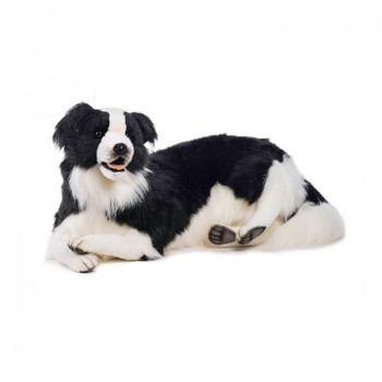 Border Collie disteso