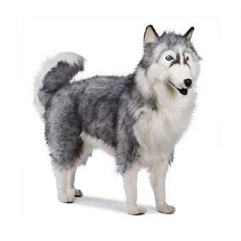 Husky grigio