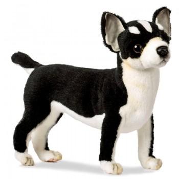 Chihuahua bianco nero