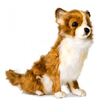 Chihuahua seduto