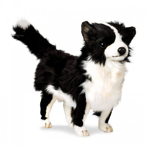 Chihuahua bianco e nero