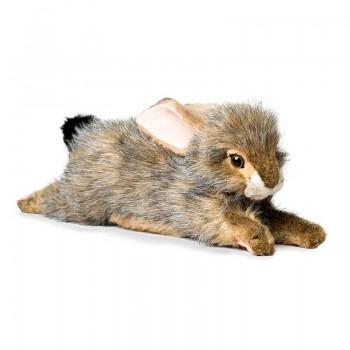 Coniglio sdraiato