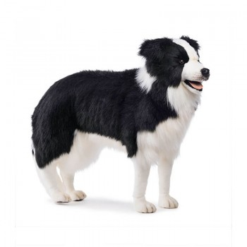 BORDER COLLIE Hansa Creation