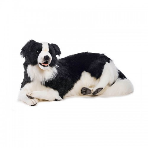BORDER COLLIE DISTESO Hansa Creation