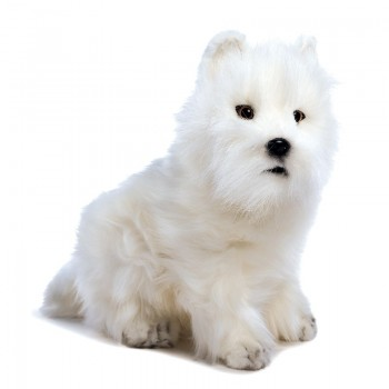 WEST HIGHLAND WHITE TERRIER...