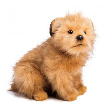 NORFOLK TERRIER Hansa Creation