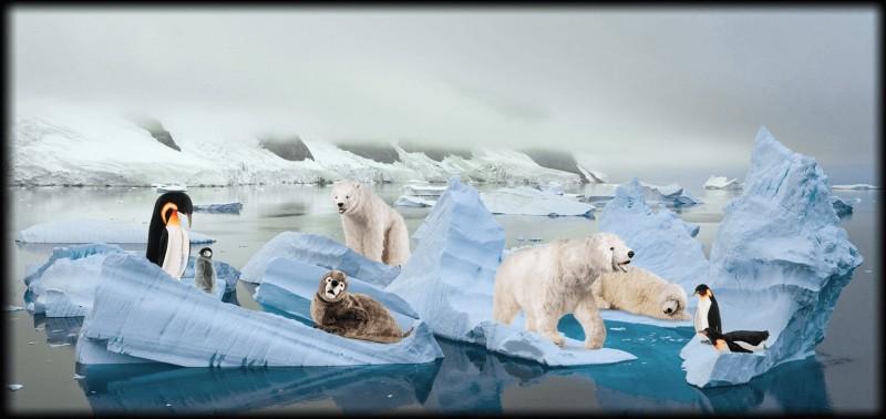 Artico e Ghiacci